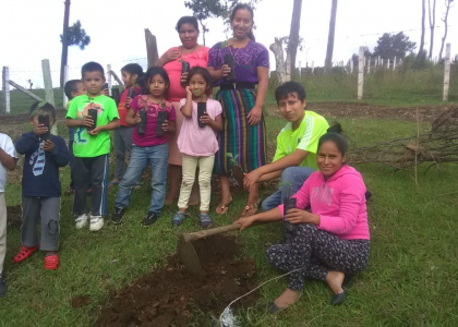 Cottonwood trees: Donation from The Municipality of San Andrés Itzapa